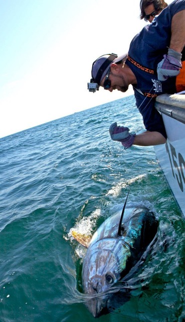 Boyd's Bluefin Tuna Charters | Tuna Charters Nova Scotia ... - photo#43