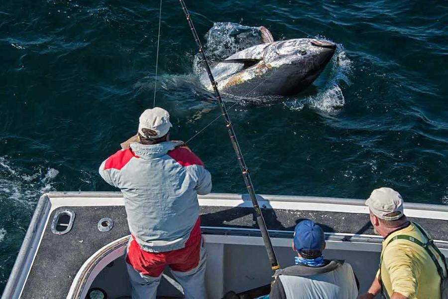 Nova Scotia Tuna Charters