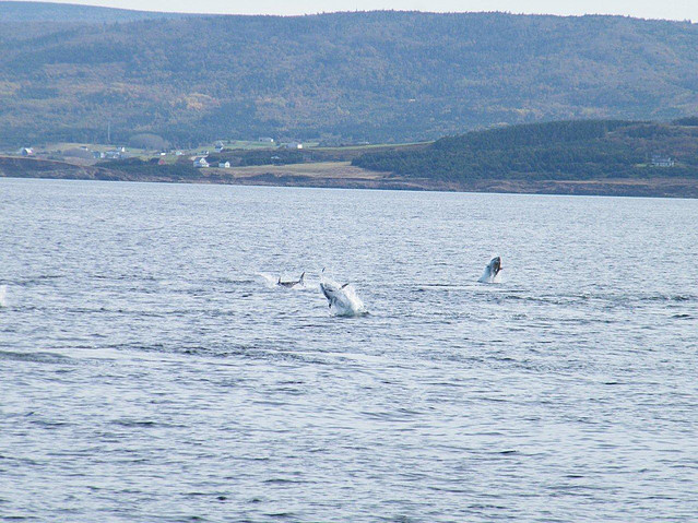 Time N'or Tide Charters | Tuna Charters Nova Scotia ... - photo#30